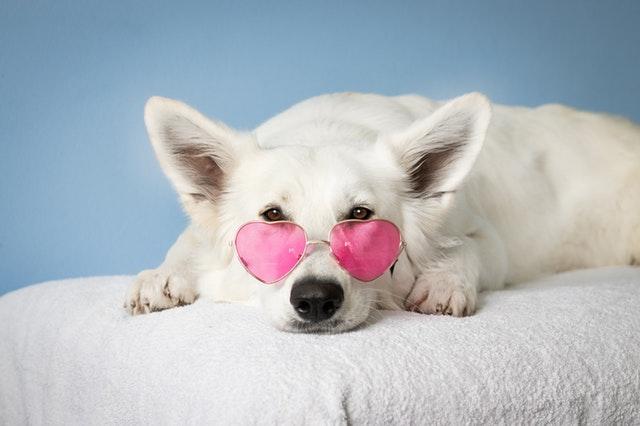 Bästa bloggarna om hundar