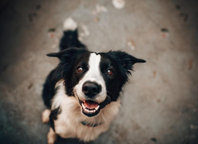 Nödvändiga kommandon du kan lära din hund