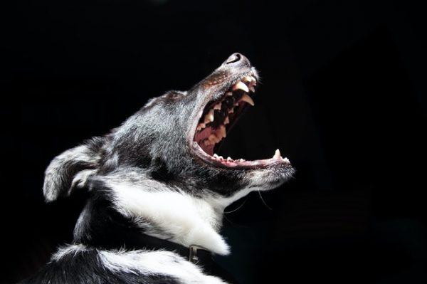 Se över din hunds tandhygien